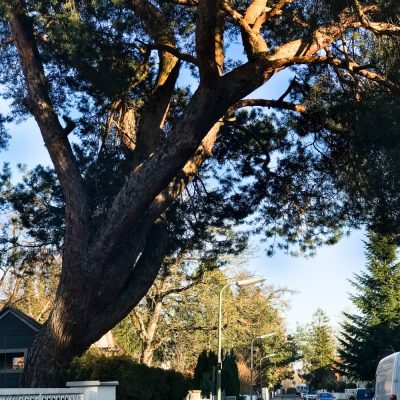 Tell a Story Januar 2018 #2   meine Straße