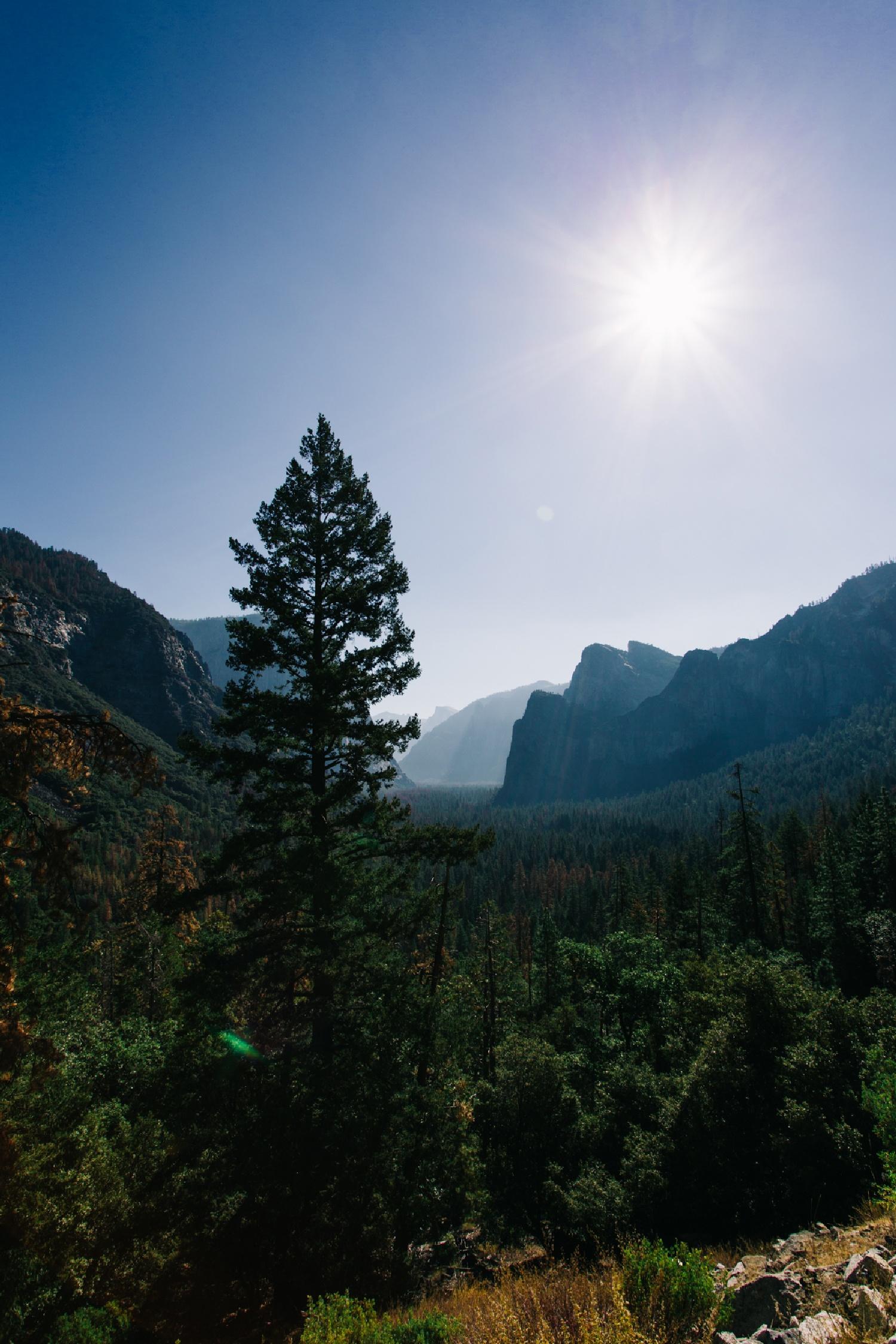 Bäume wohin das Auge reicht im Yosemite National Park - Tell a Story Bäume