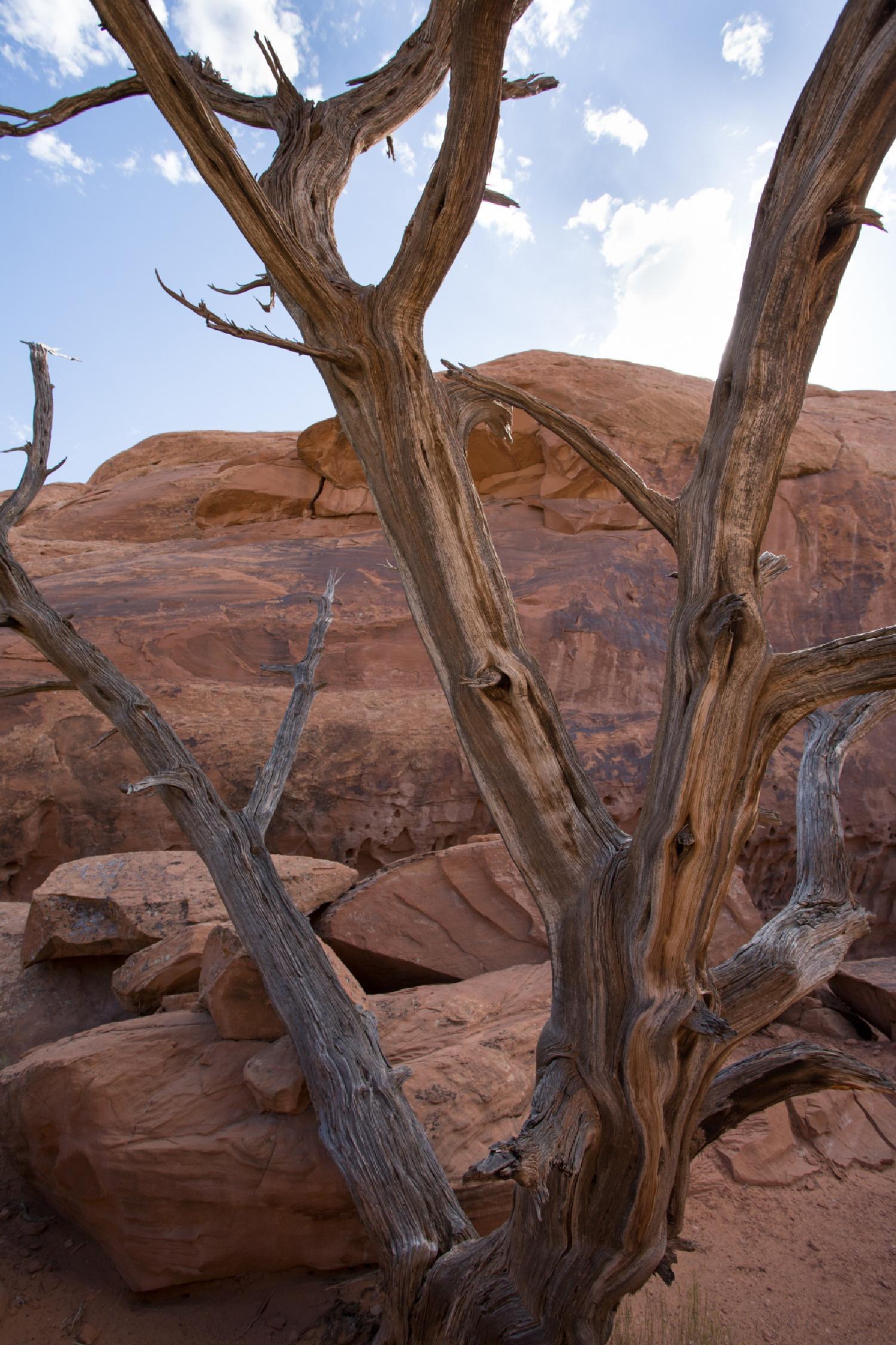 ich fotografiere sehr gerne auch tote Bäume. Farbe und Struktur faszinieren mich