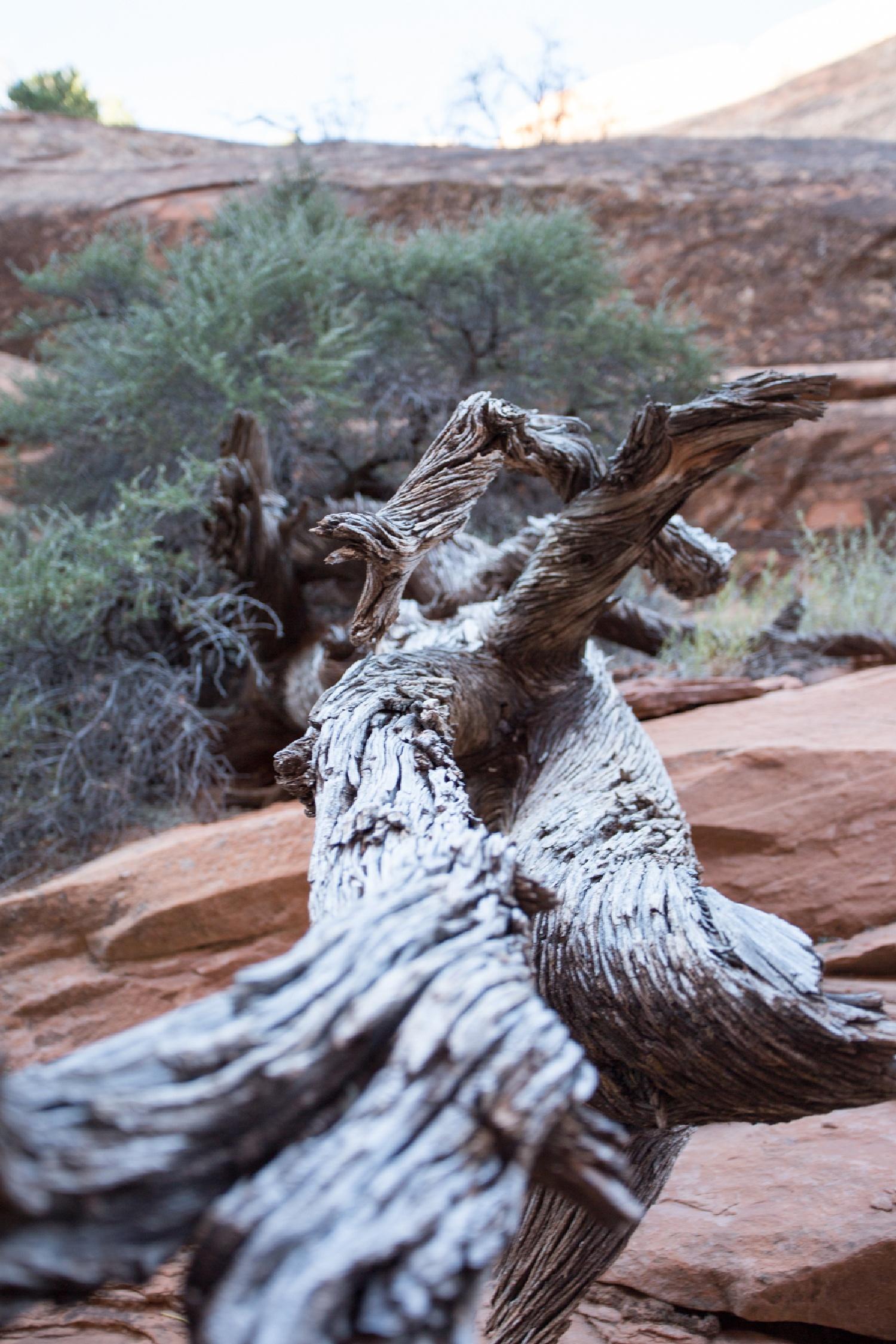 Noch ein Fabelwesen das ich oft in Bäumen sehe... Ist das real? oder nur spannend... auf jeden Fall ein guter Zeitvertreib