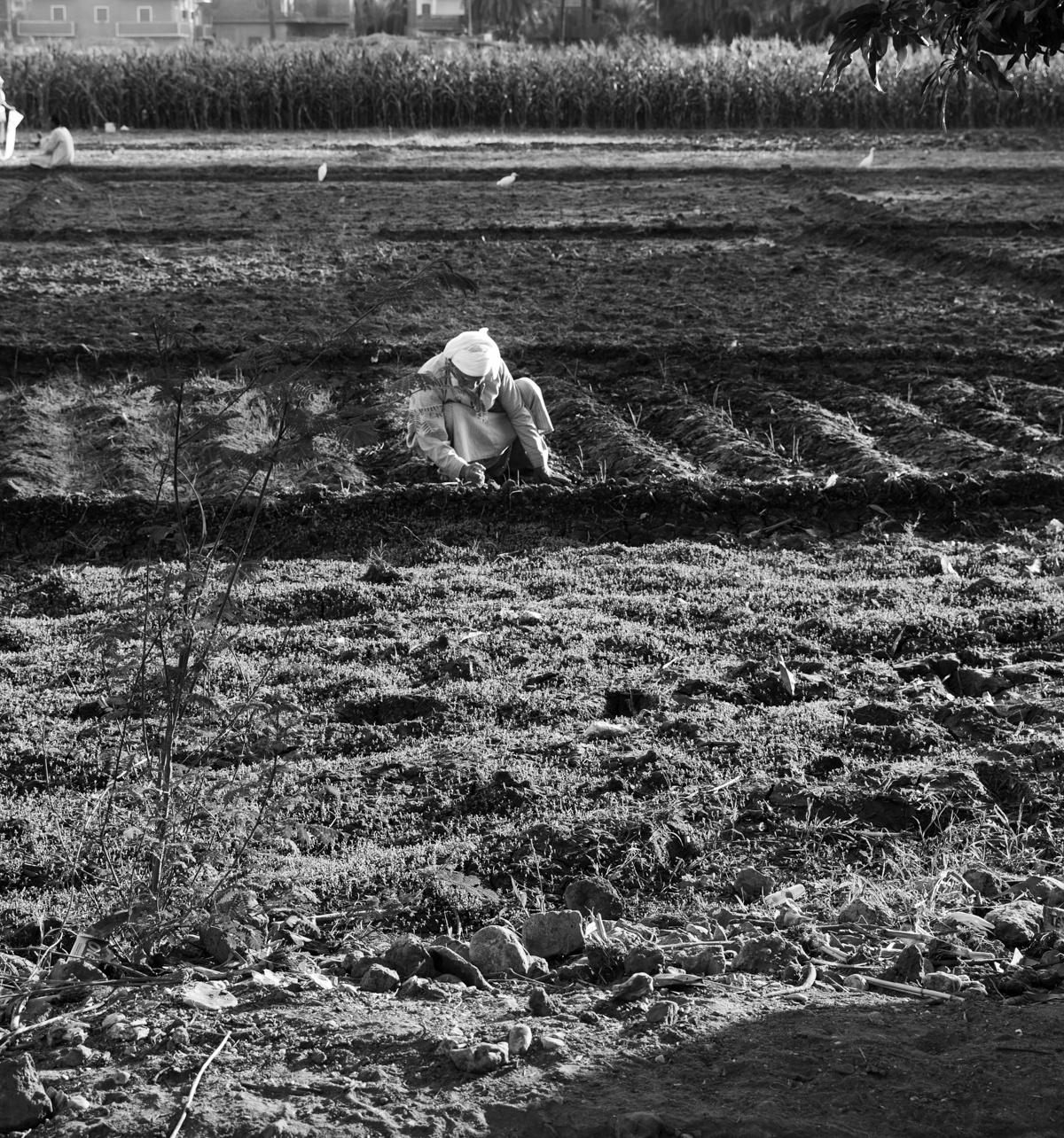 5 Fragen am Fünften April 2019 - meine Fragen heute in Schwarz Weiß - Black and White Fotography Frühstück bei Emma