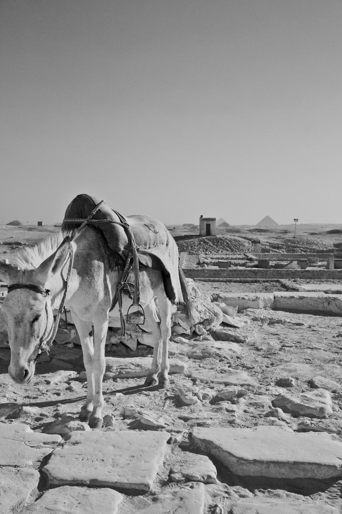 Reiseimpressionen Ägypten - Schwarz Weiß Fotografie Emma Melzer von Frühstück bei Emma